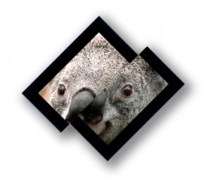 4 - Tips and Tricks for InDesign Frames